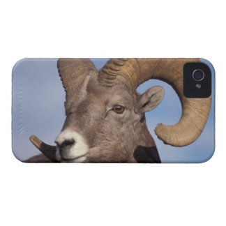 ovejas grandes del cuerno, ovejas de montaña, cana Case-Mate iPhone 4 carcasas