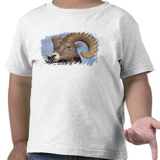 ovejas grandes del cuerno, ovejas de montaña, camisetas