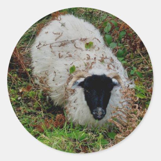 ovejas hideing en dartmoor pegatina redonda