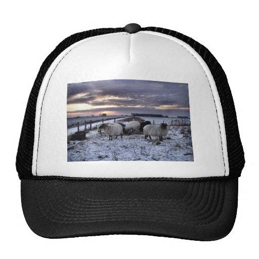 Ovejas - invierno holandés gorras de camionero