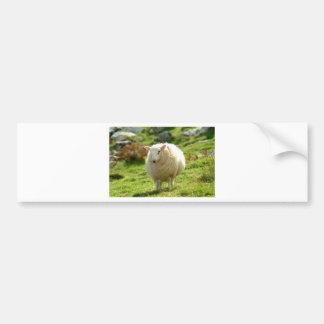 ovejas Irlanda del beara Pegatina Para Auto