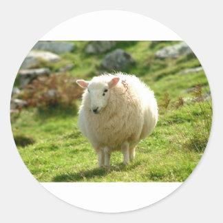ovejas Irlanda del beara Pegatina Redonda
