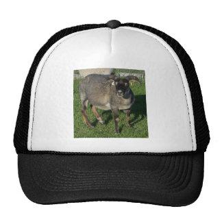 Ovejas islandesas de la oveja gorros bordados