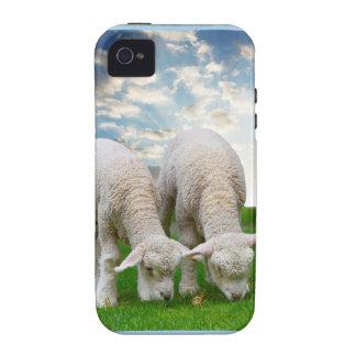 Ovejas lindas del bebé en un campo con Cl hinchado Case-Mate iPhone 4 Carcasas