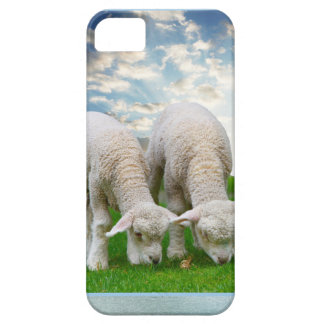 Ovejas lindas del bebé en un campo con Cl hinchado iPhone 5 Case-Mate Fundas