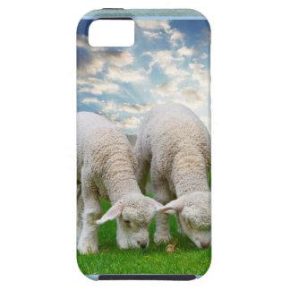 Ovejas lindas del bebé en un campo con Cl hinchado iPhone 5 Case-Mate Funda