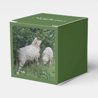 Ovejas lindas que comen la caja de encargo del cajas para regalos de boda