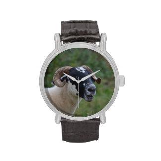 Ovejas lindas relojes de pulsera