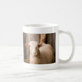 Ovejas lindas taza de café