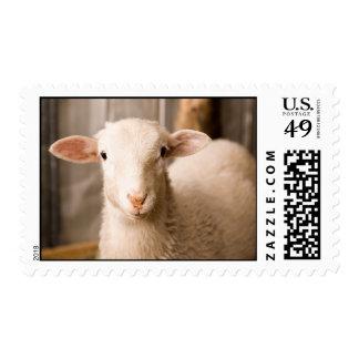 Ovejas lindas timbres postales