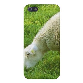 Ovejas - Mouton iPhone 5 Fundas