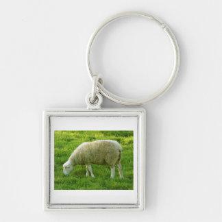 Ovejas - Mouton Llavero Cuadrado Plateado