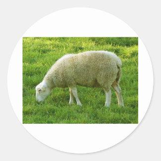 Ovejas - Mouton Pegatina Redonda