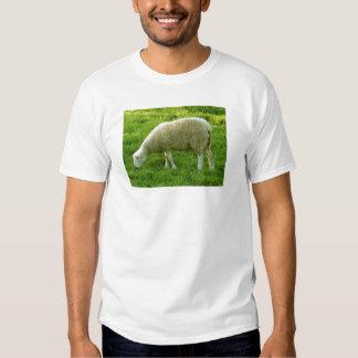 Ovejas - Mouton Polera