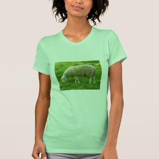 Ovejas - Mouton Remera