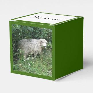 Ovejas mullidas blancas lindas que comen la caja cajas para regalos