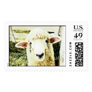 Ovejas mullidas blancas lindas sello postal
