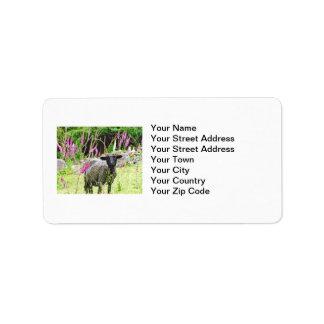 Ovejas negras etiqueta de dirección