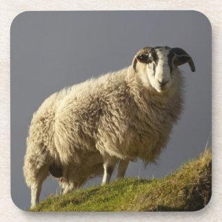 Ovejas, península de Trotternish, isla de Skye, Posavasos De Bebida