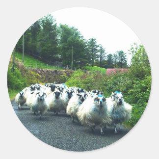 Ovejas punkyes en la península Irlanda de Beara Pegatina Redonda