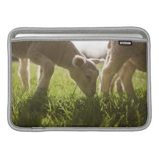 Ovejas que pastan en hierba fundas macbook air