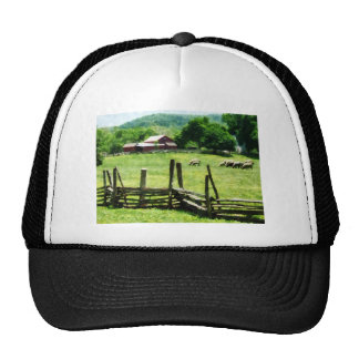 Ovejas que pastan en pasto gorra