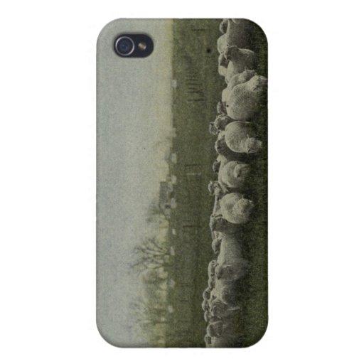 ovejas que pastan la foto 1918 iPhone 4 cárcasas