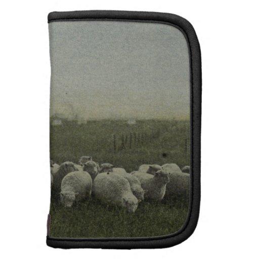ovejas que pastan la foto 1918 organizador