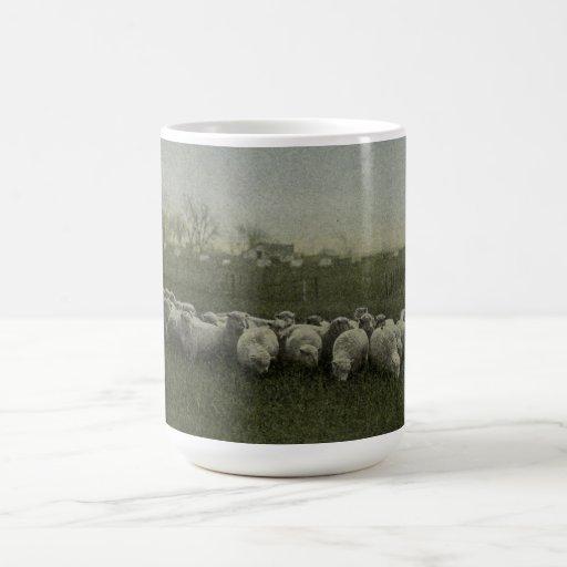 ovejas que pastan la foto 1918 taza de café