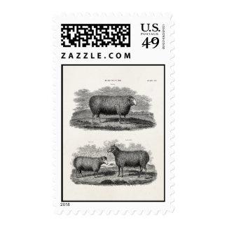 Ovejas retras de los animales del campo de la ovej sellos postales