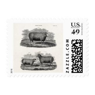 Ovejas retras de los animales del campo de la timbre postal