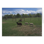 Ovejas y corderos de mayo tarjeta