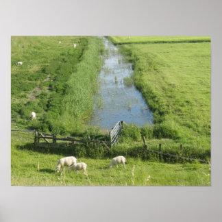 Ovejas y corderos en poster de la tierra del prado