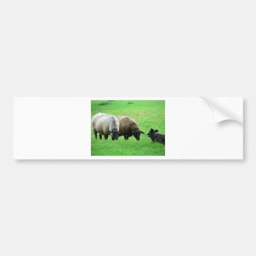 Ovejas y perro de ovejas pegatina de parachoque