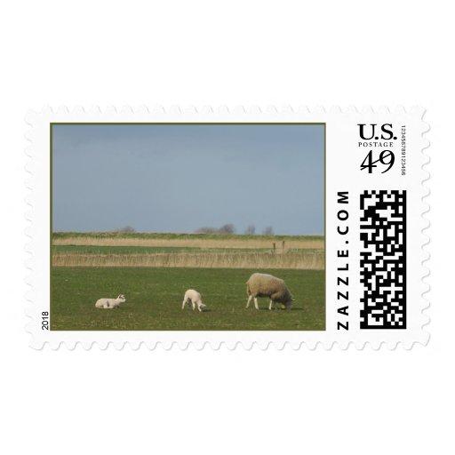Ovejas y sus sellos de la primavera de los cordero