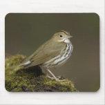 Ovenbird Mousepad