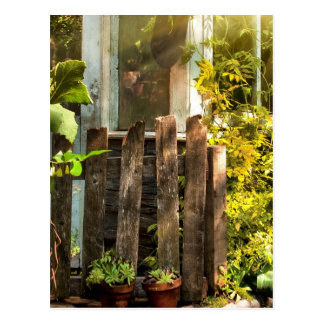 Overgrown garden in morning sunlight postcard