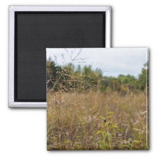 Overgrown Prairie Magnet