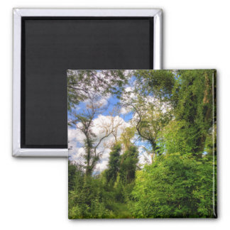 Overgrown Woodland Path 2 Inch Square Magnet