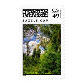 Overgrown Woodland Path Postage