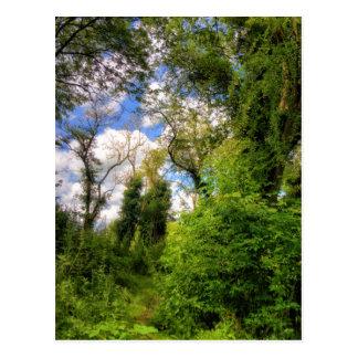 Overgrown Woodland Path Postcard