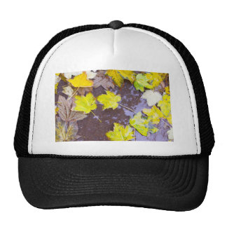 Overhead view of a wet autumn maple leaves closeup trucker hat