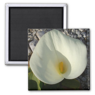 Overhead View of A White Calla Lily Against Pebble Magnet