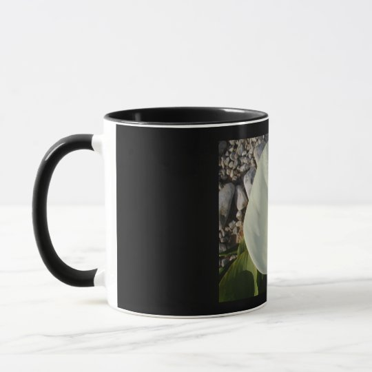 Overhead View of A White Calla Lily Against Pebble Mug