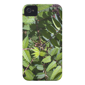 Overhead view of a young sapling tree Ailanthus al iPhone 4 Case