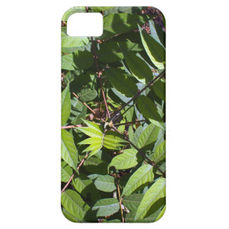 Overhead view of a young sapling tree Ailanthus al iPhone SE/5/5s Case
