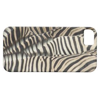 Overhead view of Burchell's Zebra (Equus iPhone SE/5/5s Case