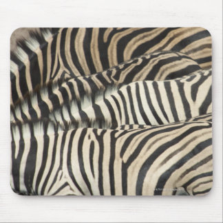 Overhead view of Burchell's Zebra (Equus Mouse Pad