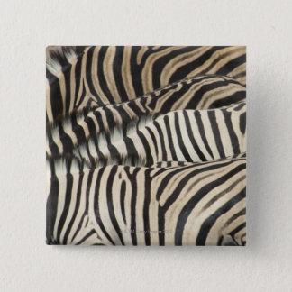 Overhead view of Burchell's Zebra Pinback Button