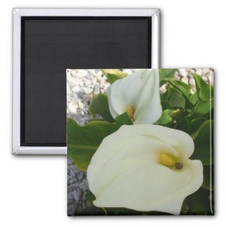 Overhead View Of Two Calla Lilies In A Garden Magnet